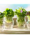 Vaso de Vidro Para Cozinha Quattro Stagioni